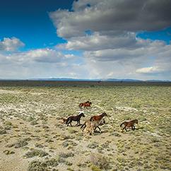Imagen de un grupo de caballos galopando en el descampado